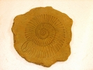 Ammonite Stepping Stone