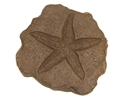 Starfish Garden Cast Stone Stepping Stone