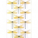 Pheromone by Christopher Marley Insect Art Amber in White Damselfly Drift