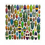 Pheromone by Christopher Marley Insect Art Coleoptera Large Mosaic
