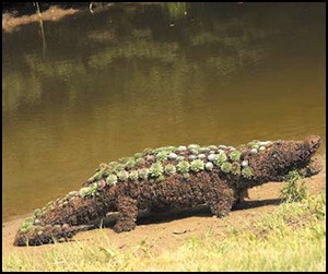 Alligator Garden Topiary Frame