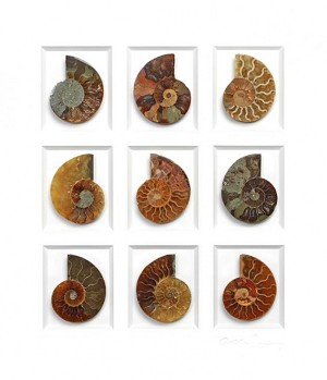 Pheromone by Christopher Marley Insect Art Cretaceous Ammonite Study
