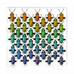 Pheromone by Christopher Marley Insect Art Sagra Spectrum in White