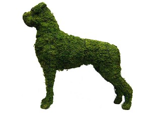 Boxer Dog Garden Topiary Mossed Frame